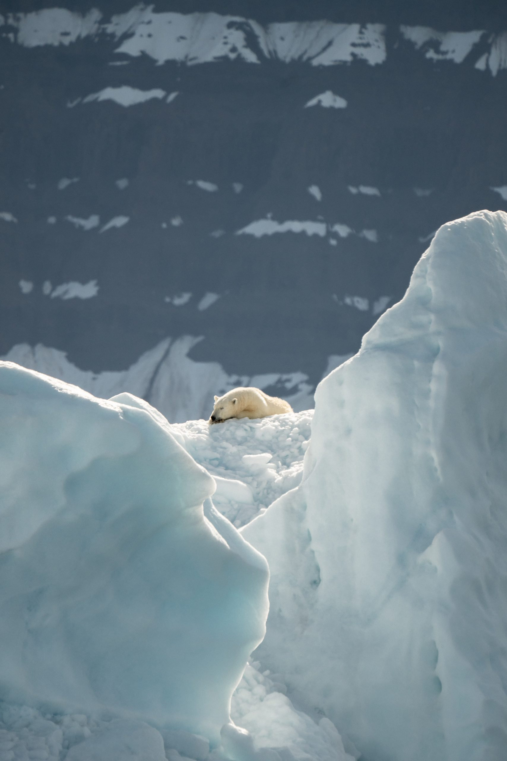 selective focus photography of polar bear on ice during daytime