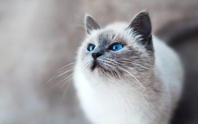 Kitten Heeled