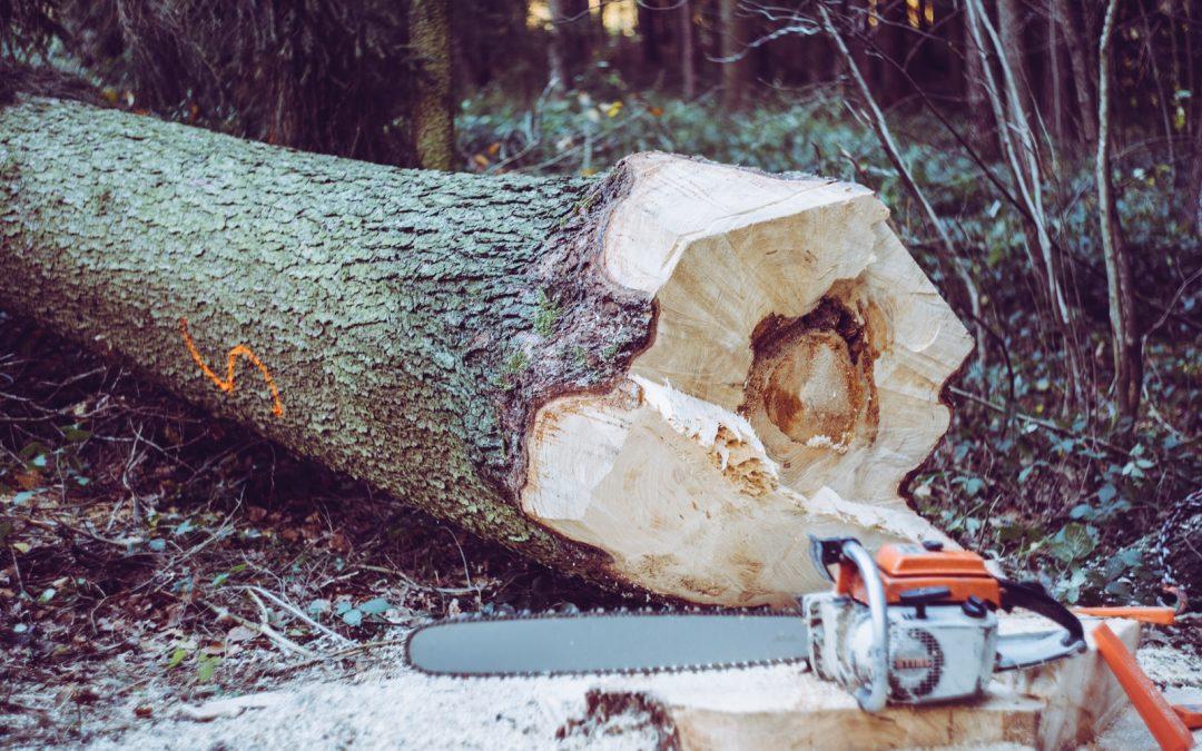 Big Timber and Damnation Spring